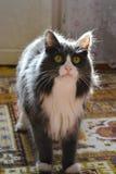 Katze 2 Lizenzfreie Stockfotos