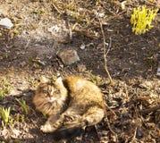 Katze aalt sich unter den ersten Strahlen der Sonne in seinem Yard stockfotos