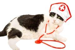 Katze als Tierarzt Lizenzfreie Stockbilder