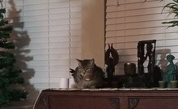 Katze auf Altar stockbild
