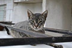 Katze auf Auto Stockfoto