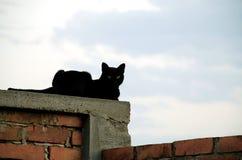 Katze auf Backsteinmauer Stockfotos