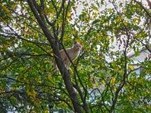Katze auf Baum im Herbst Stockbild