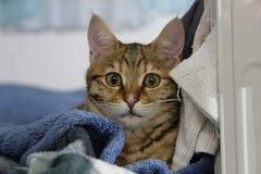 Katze auf Bett Stockbild