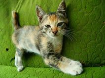 Katze auf Couch Stockfoto