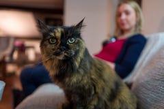 Katze auf Couch und blondem Mädchen Stockfotos