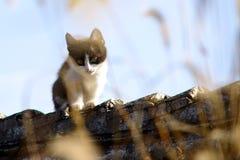 Katze auf Dach lizenzfreie stockfotografie