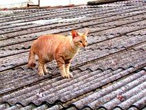 Katze auf Dach Stockbild