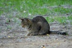 Katze auf dem Bauernhofsorgfaltbegleiter-Sorgfaltbegleiter stockbilder