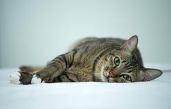 Katze auf dem Bett Stockbilder