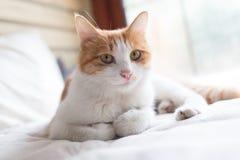 Katze auf dem Bett lizenzfreie stockfotografie