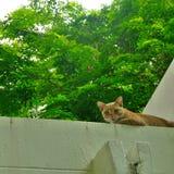 Katze auf dem Dach Lizenzfreies Stockbild