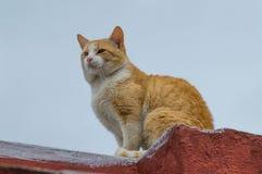 Katze auf dem Dach Stockfotografie