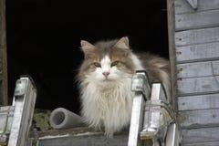 Katze auf dem Dach Lizenzfreie Stockbilder