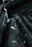 Katze auf dem Dach Stockbild