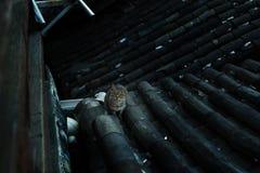 Katze auf dem Dach Stockfoto