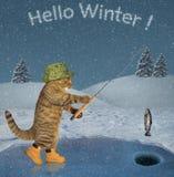 Katze auf dem Eis, das 2 fischt stockbilder
