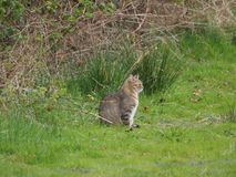 Katze auf dem Feld in der Natur Lizenzfreies Stockbild
