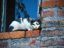 Katze auf dem Fenster lizenzfreie stockfotografie