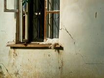 Katze auf dem Fenster eines alten Hauses Stockfoto