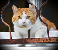 Katze auf dem Fensterbrett Lizenzfreie Stockfotografie