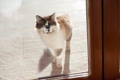 Katze auf dem Fensterbrett lizenzfreie stockbilder
