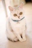 Katze auf dem Fußboden Stockbilder