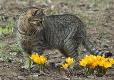 Katze auf dem Gebiet mit Blumen Stockfotos