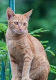 Katze auf dem grünen Hintergrund Stockbilder