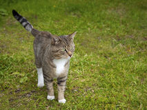 Katze auf dem Gras Stockfotografie