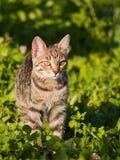 Katze auf dem Gras stockfotos