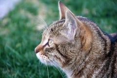 Katze auf dem Grasaufpassen Stockbild