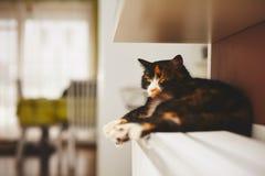 Katze auf dem Heizkörper Stockbilder