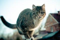 Katze auf dem Hintergrund des Hauses Stockfoto