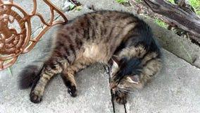Katze auf dem konkreten Lügen stock video footage