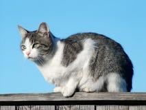 Katze auf dem Latten Stockfotografie