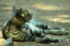 Katze auf dem Sand Lizenzfreie Stockbilder