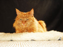 Katze auf dem Schaffell Stockbild