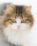 Katze auf dem Schnee lizenzfreie stockfotografie