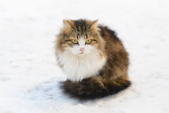 Katze auf dem Schnee Stockfotografie
