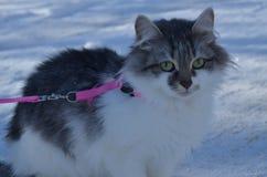 Katze auf dem Schnee stockbild