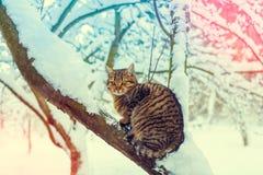 Katze auf dem schneebedeckten Baum Lizenzfreies Stockbild