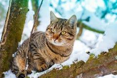 Katze auf dem schneebedeckten Baum Stockbild