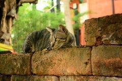Katze auf dem Stein Stockbilder
