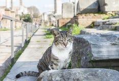Katze auf dem Stein Römisches Forum rom Stockbilder