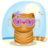 Katze auf dem Strand Stockbild