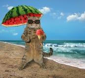 Katze auf dem Strand 8 Lizenzfreie Stockbilder