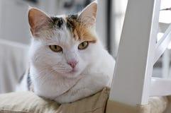 Katze auf dem Stuhl Stockfotografie