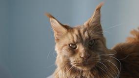 Katze auf dem Tisch Lizenzfreie Stockfotos