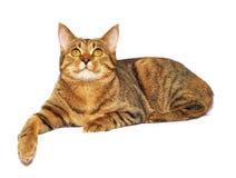 Katze auf dem Weiß Lizenzfreie Stockfotografie